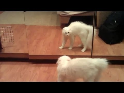 Animals vs Mirrors Compilation