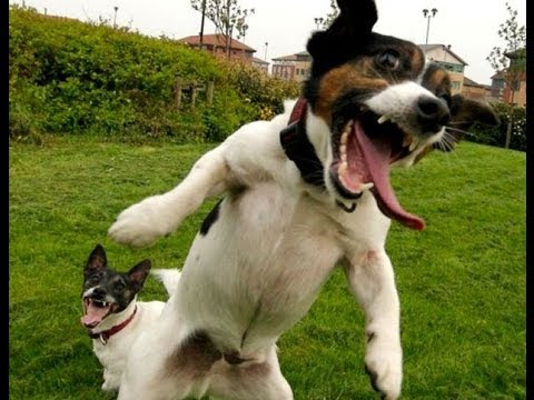 BEST FUNNY DOGS COMPILATION LONG (2013 – 2014)