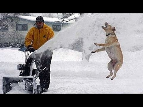 Funny dogs and cats playing in the snow – Funny animal compilation