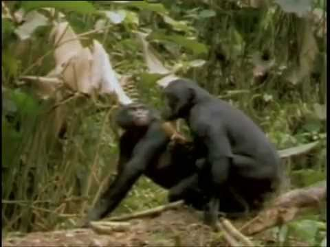Private life of Animals 2013 Funny mating