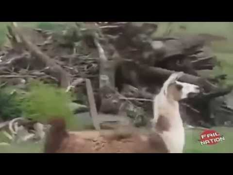When Animals Attack – Funny Compilation