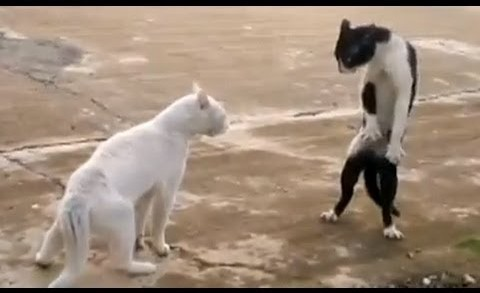Funny Cats – Compilation
