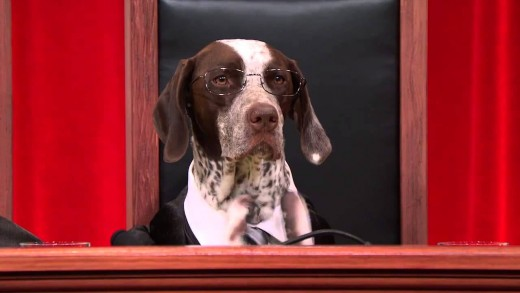 Dog Supreme Court Debates Human Sacrifice #puppyjustice #realanimalsfakepaws