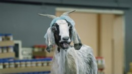 Scapegoat: It's What You Do – GEICO