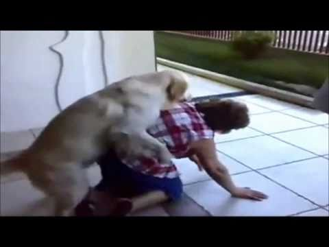 Animals Mating With Humans Funny