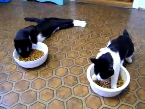 Funny Cat Videos – Cats on Anesthesia