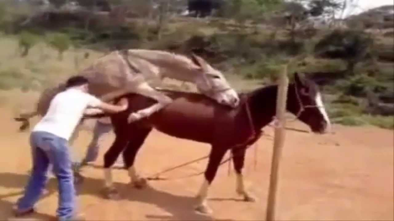 Hot animal mating crazy videos – funny video 2014 Part62