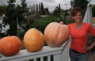 How to Roast Pumpkin Seeds – 3 Ways and Time Saving Tip