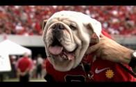 Meet University of Georgia mascot Uga the bulldog
